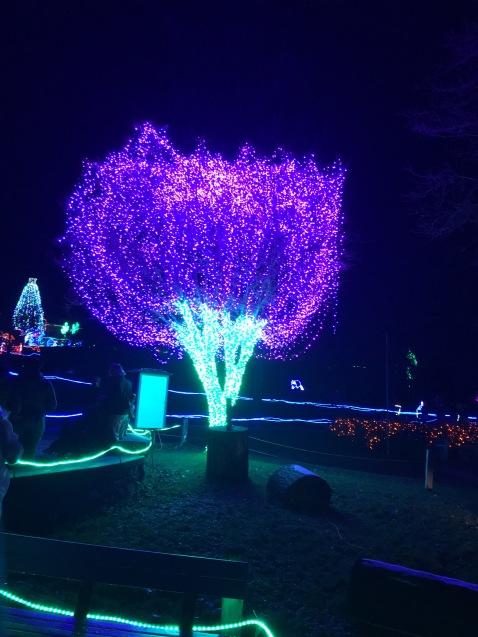 The iconic purple tree